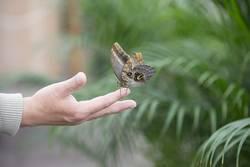 Navštivte motýlí dům v Karlových Varech – právě otevíráme!
